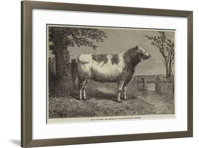 Royal Butterfly, the Property of Lieutenant-Colonel Towneley--Framed Giclee Print