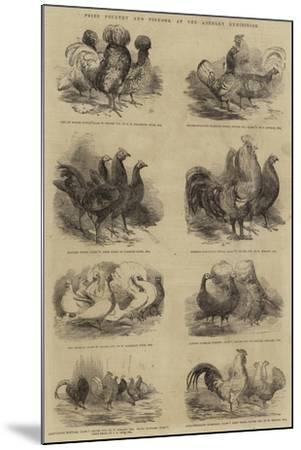 Prize Poultry and Pigeons, at the Anerley Exhibition--Mounted Giclee Print