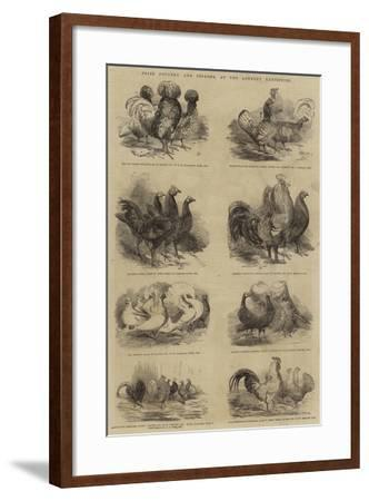 Prize Poultry and Pigeons, at the Anerley Exhibition--Framed Giclee Print
