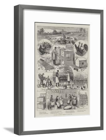 The Great Egg Question, Sketches at a Poultry Farm--Framed Giclee Print