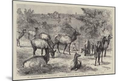Imported American Elk, Wapiti, at Osmaston Manor, Derby--Mounted Giclee Print
