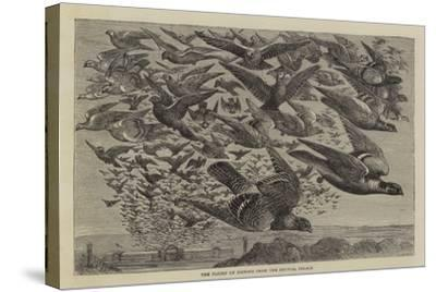 The Flight of Pigeons from the Crystal Palace--Stretched Canvas Print
