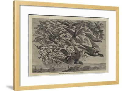 The Flight of Pigeons from the Crystal Palace--Framed Giclee Print