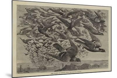 The Flight of Pigeons from the Crystal Palace--Mounted Giclee Print