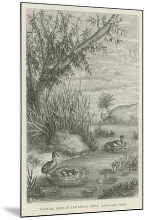 Floating Nests of the Little Grebe--Mounted Giclee Print