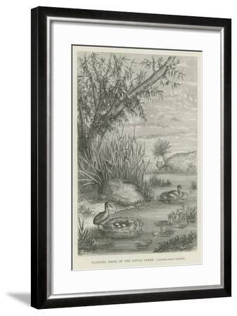 Floating Nests of the Little Grebe--Framed Giclee Print