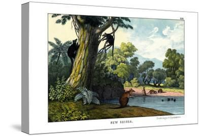 Dendrolagus and Hypsiprymnus, 1860--Stretched Canvas Print