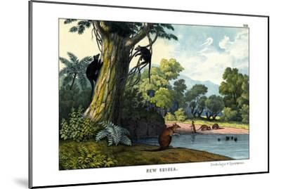 Dendrolagus and Hypsiprymnus, 1860--Mounted Giclee Print