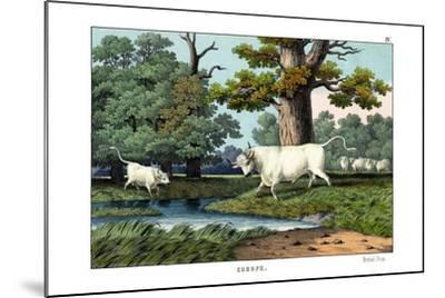 Wild Cattle of Britain, 1860--Mounted Giclee Print