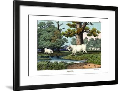 Wild Cattle of Britain, 1860--Framed Giclee Print
