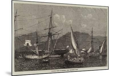 Loading Fruit at Smyrna--Mounted Giclee Print