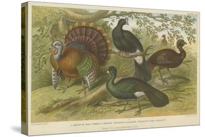 Turkey and Curassows--Stretched Canvas Print