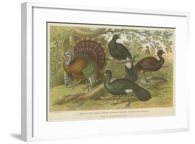 Turkey and Curassows--Framed Giclee Print
