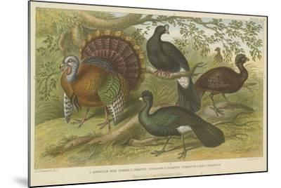 Turkey and Curassows--Mounted Giclee Print