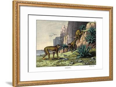 Barbary Ape, 1860--Framed Giclee Print