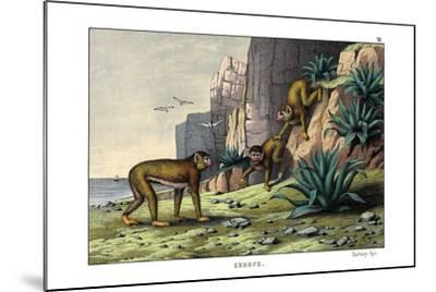 Barbary Ape, 1860--Mounted Giclee Print