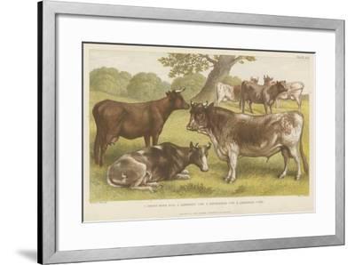Cattle--Framed Giclee Print