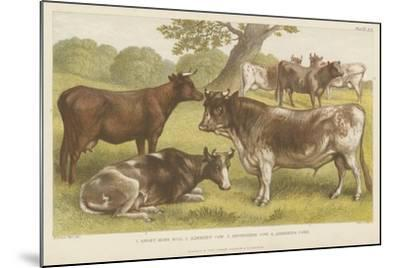 Cattle--Mounted Giclee Print