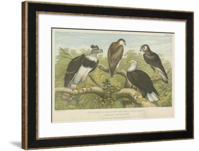Eagles--Framed Giclee Print