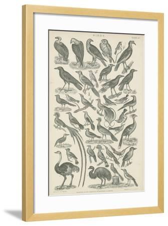 Birds--Framed Giclee Print