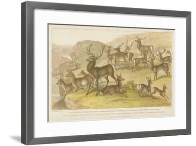 Deer--Framed Giclee Print