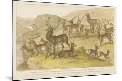 Deer--Mounted Giclee Print
