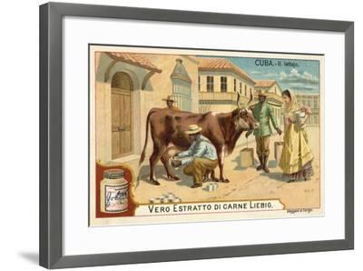 Milking, Cuba--Framed Giclee Print