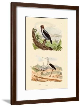 Bearded Bellbird, 1833-39--Framed Giclee Print