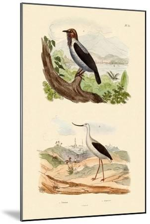 Bearded Bellbird, 1833-39--Mounted Giclee Print