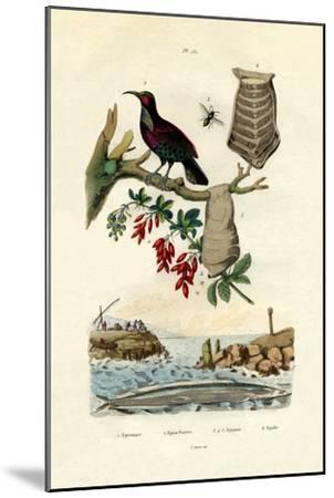 Bird of Paradise, 1833-39--Mounted Giclee Print