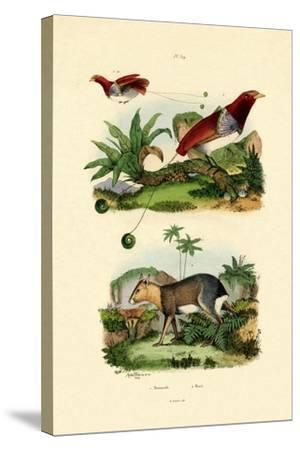 Bird of Paradise, 1833-39--Stretched Canvas Print
