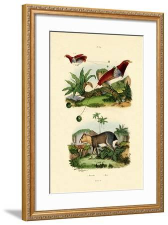 Bird of Paradise, 1833-39--Framed Giclee Print