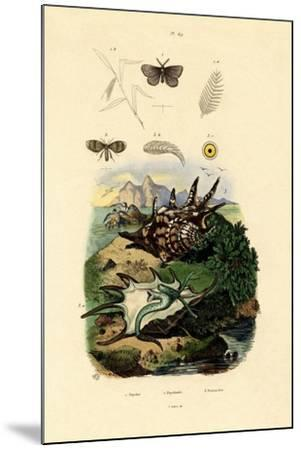 Black-Spotted White, 1833-39--Mounted Giclee Print