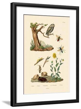 Cricket Hunter Wasp, 1833-39--Framed Giclee Print