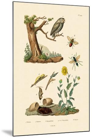 Cricket Hunter Wasp, 1833-39--Mounted Giclee Print