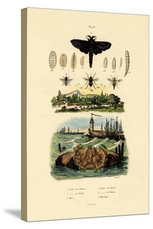 Dark Giant Horsefly, 1833-39--Stretched Canvas Print