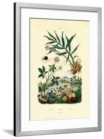 Shiny Spider Beetle, 1833-39--Framed Giclee Print