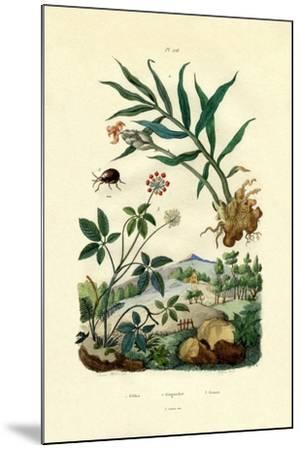 Shiny Spider Beetle, 1833-39--Mounted Giclee Print