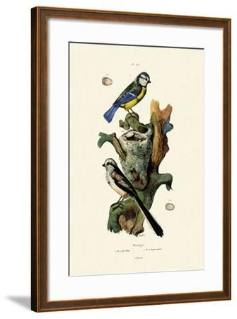 Long-Tailed Tit, 1833-39--Framed Giclee Print