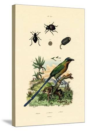 Black Cucumber, 1833-39--Stretched Canvas Print