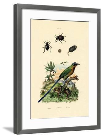 Black Cucumber, 1833-39--Framed Giclee Print