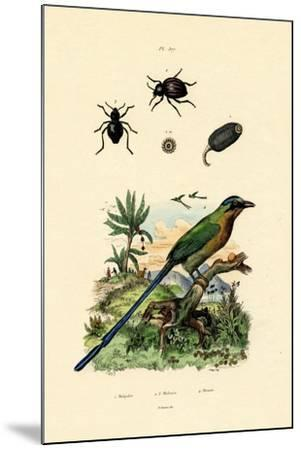 Black Cucumber, 1833-39--Mounted Giclee Print