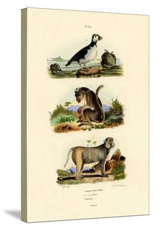 Bonnet Macaque, 1833-39--Stretched Canvas Print
