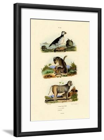 Bonnet Macaque, 1833-39--Framed Giclee Print