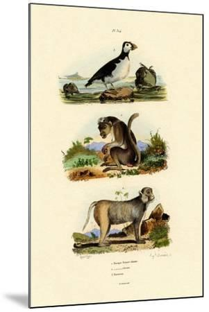 Bonnet Macaque, 1833-39--Mounted Giclee Print