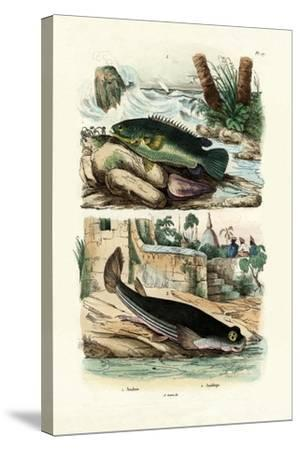 Climbing Perch, 1833-39--Stretched Canvas Print