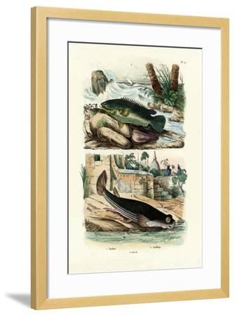 Climbing Perch, 1833-39--Framed Giclee Print