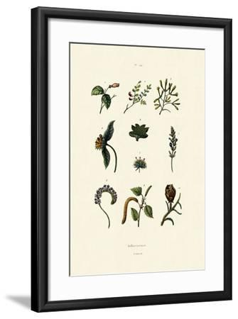 Inflorescence, 1833-39--Framed Giclee Print