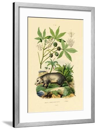 Common Opossum, 1833-39--Framed Giclee Print