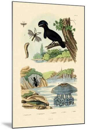 Flying Gurnard, 1833-39--Mounted Giclee Print
